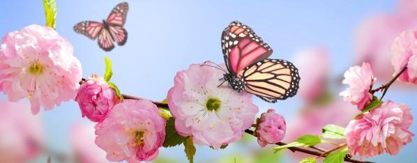 spring-02.jpg