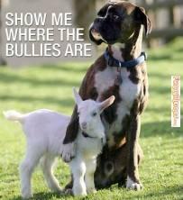 Bullied Sheep from Schmackos Aust.