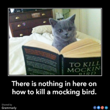 How to kill a Mocking bird 190714 fr FB