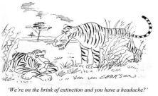 Tiger extinction.